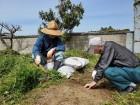 ボランティアさんと畑仕事☆「汗をかくのが一番よ!!」と楽しまれています。