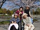 みんなで桜を見に来たよ(^◇^)
