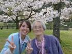 鱒淵ダム、桜が満開です!