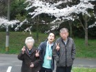 桜見物(●^o^●)