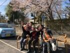 《お花見》徳力の駐車場にも桜が咲きました!とっても綺麗ね!